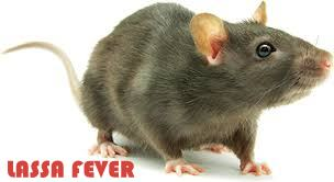 Another Lassa Fever Outbreak!